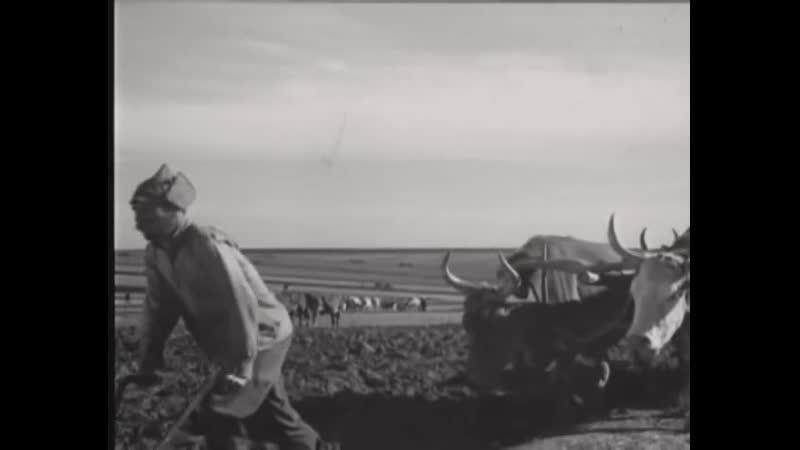Поднятая целина 1939 Драма Советский фильм СССР