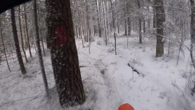 Обзор лесного участка трека