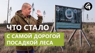 Оцениваем результаты Всероссийского дня посадки леса в Ленинградской области