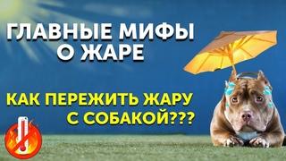 Как защитить собаку летом   Что нельзя делать в жару   Как охладить собаку   Стрижка поможет?