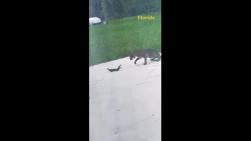 В мире животных Флорида