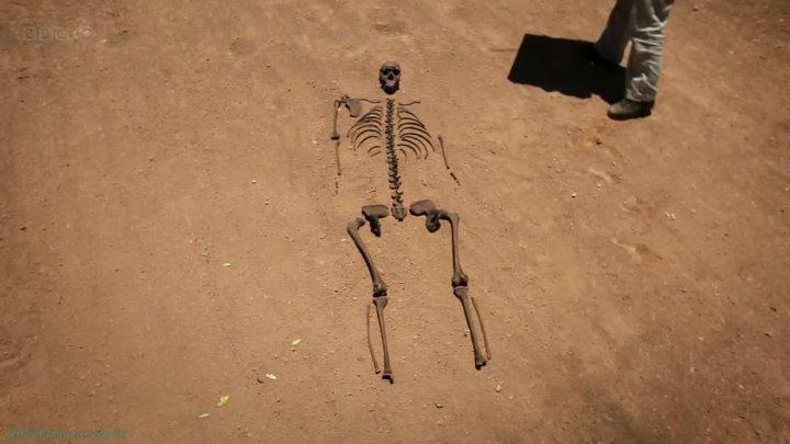 BBC Происхождение человека 1 Кости Познавательный история антропогенез исследования 2011