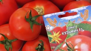 Вот и выросли томаты!