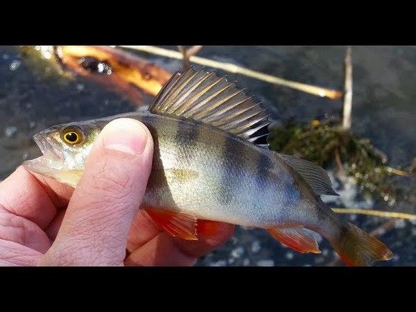 Обкатываем силикон от на рыбалке