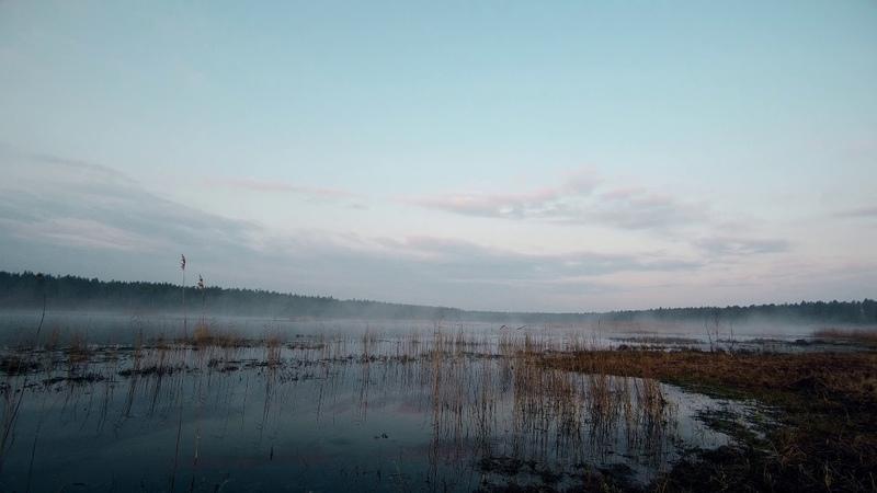 Болото Михайловское Mikhailovsky swamp