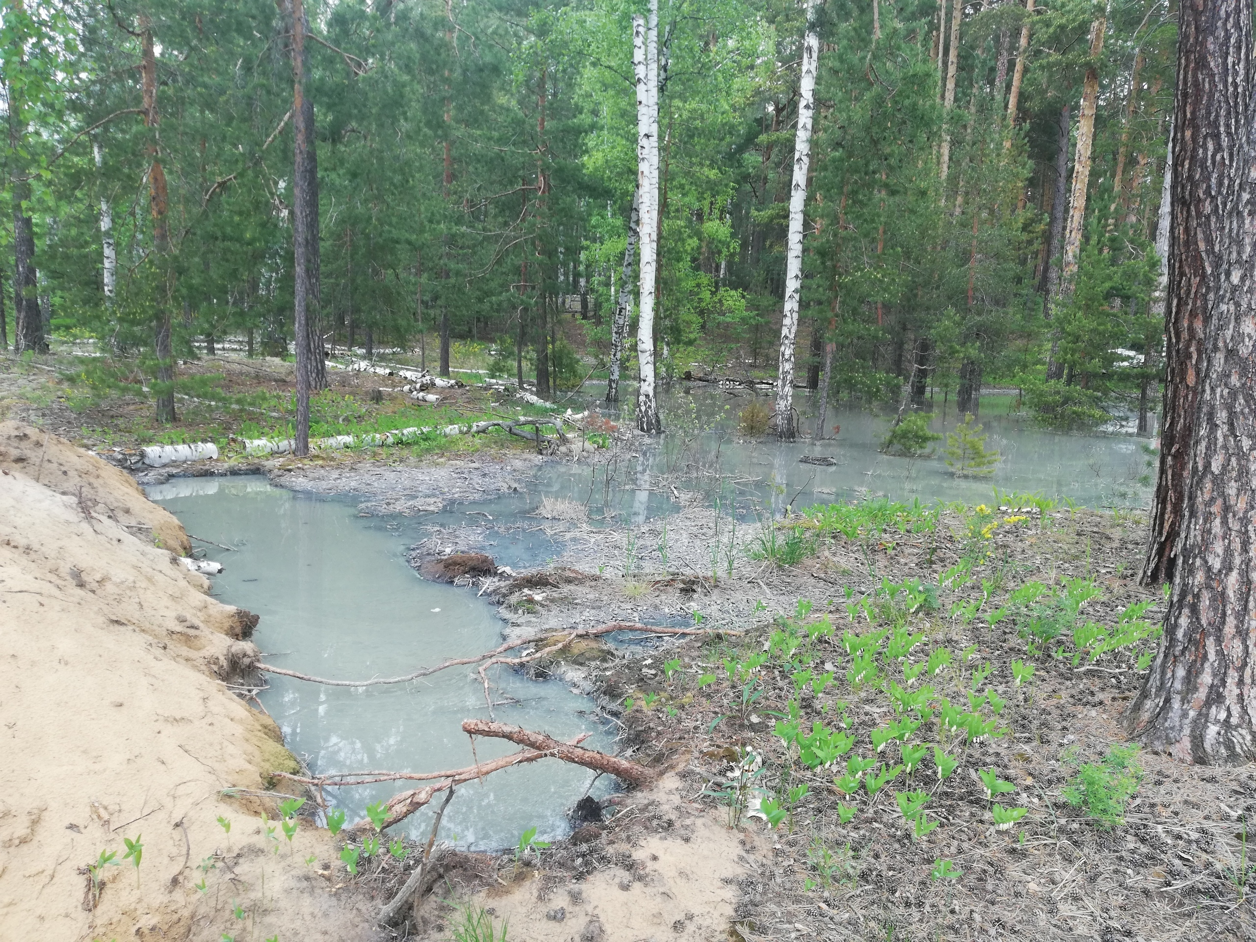 Нечистоты разлились по лесу в Звениговском районе