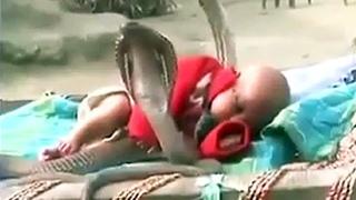 Кобра Спасает Жизнь Ребенку! Животные-Спасатели Снятые на Камеру