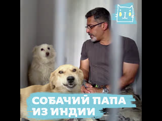 Самый большой в стране питомник для больных и изувеченных собак