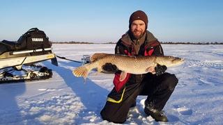 За трофейными окунями на снегоходе 2020. Зимняя рыбалка на окуня в Заболотье.