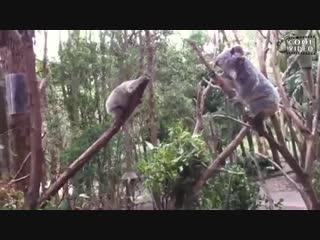 Матери среди животных...