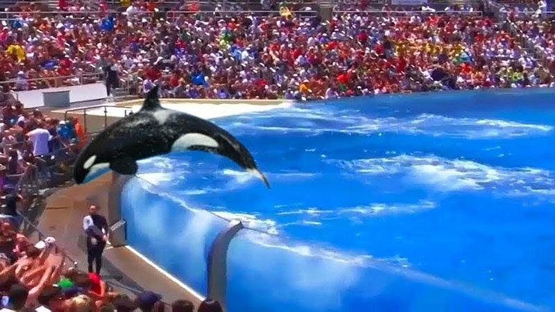 Uma Orca Pulou Muito Alto e Assustou Seu Treinador
